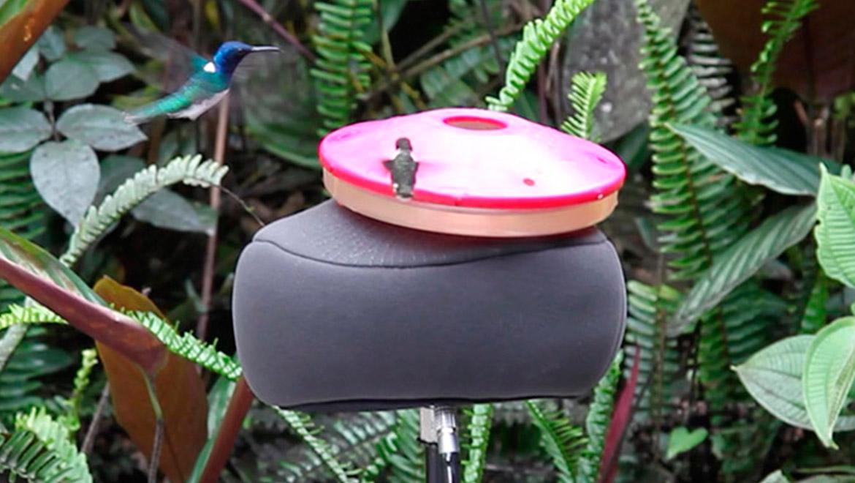 5100-hummingbird-nav-item.jpg